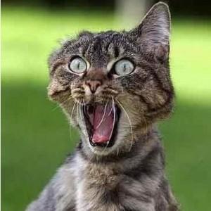 a-curiosidade-matou-o-gato-ganhar-dinheiro-na-internet